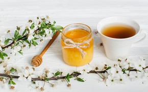Picture flowers, branches, tea, honey