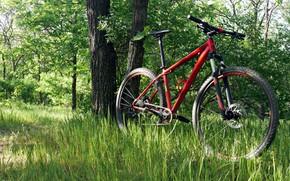 Wallpaper grass, Nature, spring, Sport, Bike, Yellowstone, 2018, Bike, Sport, Canyon, Salen