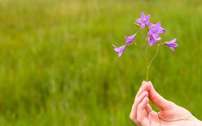 Picture field, flower, blue, green, bells, bell, wild flower, Vladimir Miloserdov, flower in hand