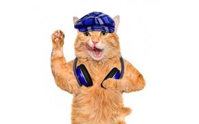 Picture language, cat, paw, headphones, red, cap