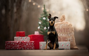 Picture gifts, tree, bag, doggie, dog, Miniature Pinscher