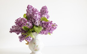 Picture flowers, lilac, Lilac, Styled