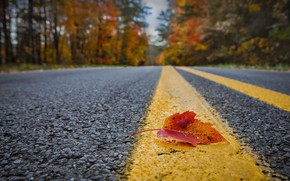 Picture road, autumn, sheet
