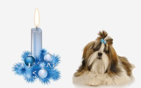 Picture dog, decoration, candle, prazdnik, the year of the Dog