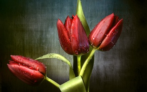 Picture drops, red, tulips, trio, buds