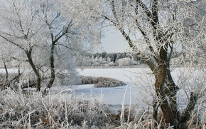 Picture winter, trees, lake, frost