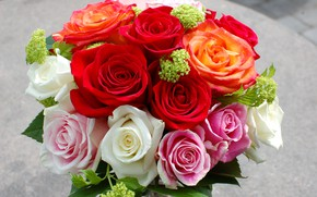 Picture bright, roses, bouquet, roses, bouquets