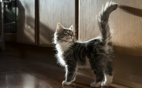 Wallpaper kitty, tail, fluffy