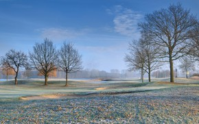Picture frost, field, leaves, trees, golf course