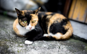 Wallpaper cat, eyes, look