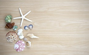 Picture background, shell, starfish
