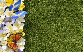 Picture butterfly, flowers, spring, grass, weed, flowers, spring, lawn