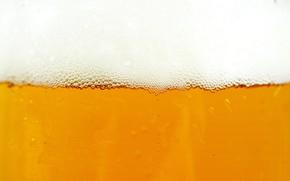 Picture foam, beer, beer