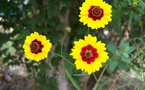 Picture flowers, trio, Meduzanol ©, yellow-brown