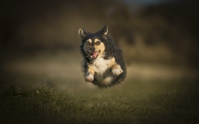 Picture eyes, background, dog, runs