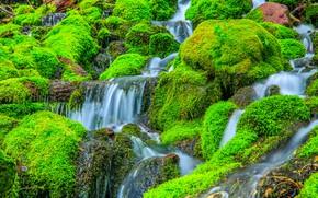 Picture stones, rocks, waterfall, stream, plants