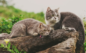 Picture cats, log, a couple, two cats
