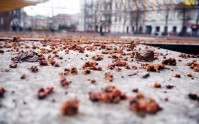 Picture autumn, leaves, the city, street, home, blur, area