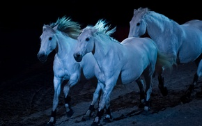 Picture light, night, horse, the herd