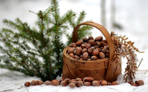 Wallpaper winter, forest, nature, spruce, frost, walk, nuts, basket, composition, January, report