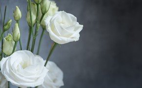 Picture flowers, bouquet, Eustoma, white buds