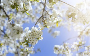 Picture the sky, the sun, branches, spring, sunshine, flowering, blossom, spring, bloom