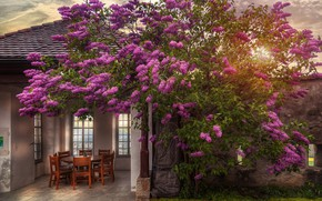Picture flowers, table, tree, chairs, treatment, gazebo, castle garden
