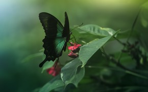 Picture butterfly, wings, insect, green