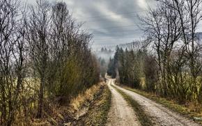 Picture road, autumn, nature