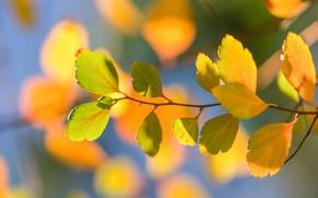 Picture autumn, leaves, macro, branch, bokeh