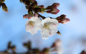 Picture macro, branch, spring, Sakura