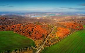 Picture autumn, forest, Panorama, Moldova