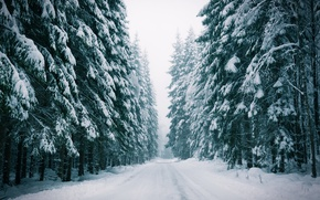 Picture winter, forest, road, fog