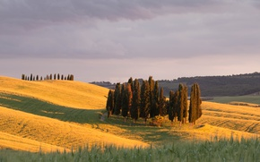 Picture trees, field, Italy, hills, sunlight, countryside, Tuscany, farmland, San Quirico d'orcia