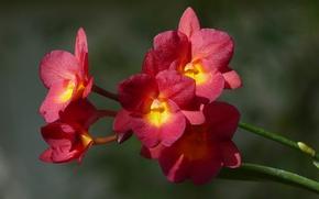Picture Orchid, Orchid, Bokeh, Bokeh