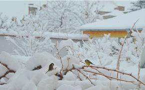 Wallpaper Winter, Snow, Frost, Birds, Frost, Snow, Winter morning, Winter morning, Birds