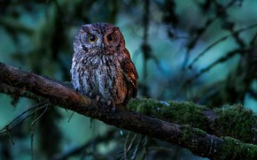Picture forest, tree, owl, branch