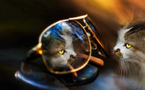 Picture cat, animal, reflection, glasses, Eleonora Di Primo, cat
