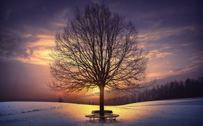 Picture winter, sunset, tree, bench