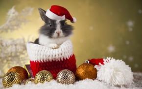 Wallpaper rabbit, new year, holiday, toys, bag