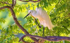 Picture bird, bright, Heron