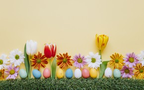 Picture grass, flowers, chamomile, spring, colorful, Easter, tulips, chrysanthemum, flowers, tulips, spring, Easter, eggs, decoration, Happy, ...
