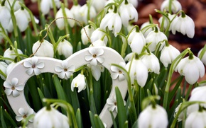 Picture flowers, nature, heart, spring, snowdrops