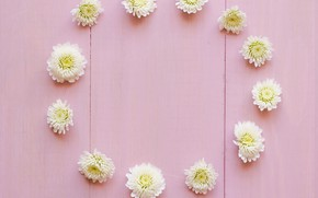 Wallpaper flowers, white, white, buds, wood, pink, flowers, decoration, circle