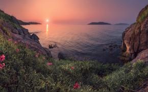 Wallpaper sunset, Lily, summer, the sun, sea