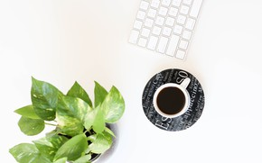 Picture flower, coffee, Cup, keyboard