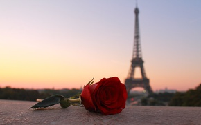 Wallpaper flower, the city, Paris, rose, tower, the evening, Paris