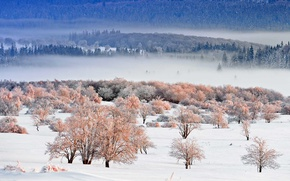 Picture winter, snow, trees, landscape, Germany, national Park, North Rhine-Westphalia, Eifel, The Eifel