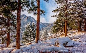 Picture winter, snow, trees, mountains, Colorado, pine, Colorado, Rocky mountains, Rocky Mountains