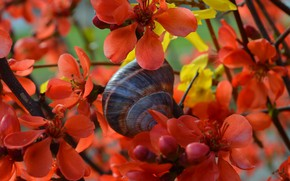 Picture Flowers, Snail, Orange flowers